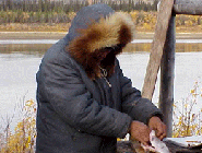 Gwich'in Traditional Knowledge Projects